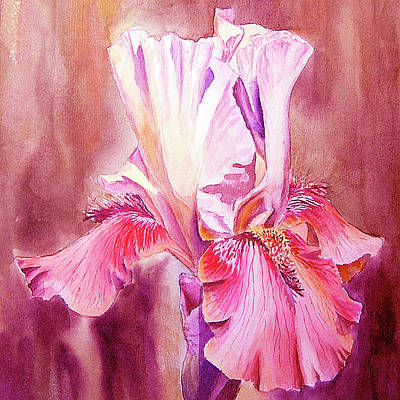 Royalty-Free and Rights-Managed Images - Happy Pink Iris Flower In The Garden Watercolor   by Irina Sztukowski