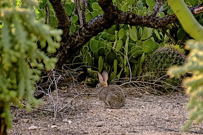 Mark Myhaver Rights Managed Images - Hare Habitat h22 Royalty-Free Image by Mark Myhaver