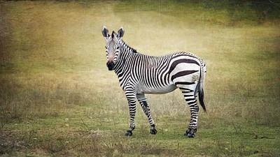 Outdoor Graphic Tees - Hartmanns Zebra by Joan Carroll