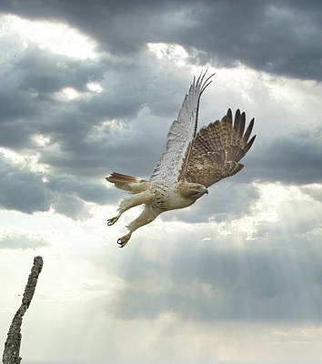 Achieving - Hawk Leaps to Heavens by William Jobes
