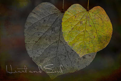Photograph - Heart and Soul Moody Leaves by Judy Garrard