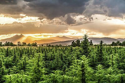 Landscapes Royalty-Free and Rights-Managed Images - Hemp Farm 69 by Hemp Landscapes