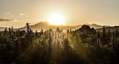 Landscapes Royalty-Free and Rights-Managed Images - Hemp Field at Sunset by Hemp Landscapes