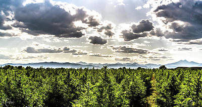 Landscapes Royalty-Free and Rights-Managed Images - Hemp Field Sunset 105 by Hemp Landscapes