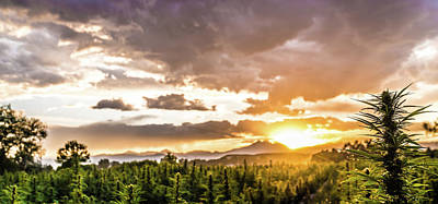 Landscapes Royalty-Free and Rights-Managed Images - Hemp Field Sunset 77 by Hemp Landscapes