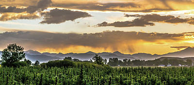 Landscapes Royalty-Free and Rights-Managed Images - Hemp Field Sunset 86 by Hemp Landscapes