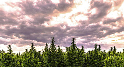 Landscapes Royalty-Free and Rights-Managed Images - Hemp Field Sunset 30 by Hemp Landscapes