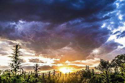 Landscapes Royalty-Free and Rights-Managed Images - Hemp Field Sunset 74 by Hemp Landscapes