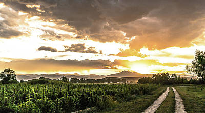 Landscapes Royalty-Free and Rights-Managed Images - Hemp Field Sunset 80 by Hemp Landscapes