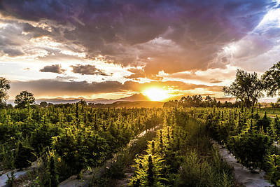 Landscapes Royalty-Free and Rights-Managed Images - Hemp Sunset 73 by Hemp Landscapes