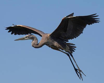 Landscape Photos Chad Dutson - Heron in Flight by Robert Wilder Jr