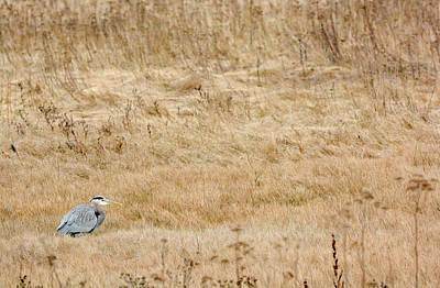 Photograph - Heron in wait by Kaishin Chu