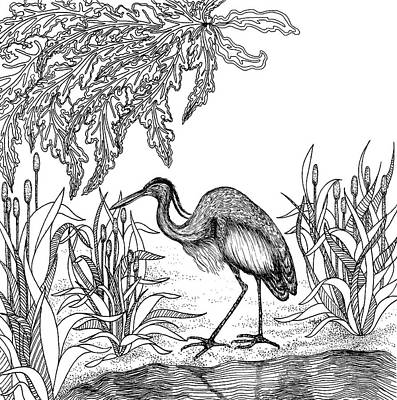 Animals Drawings - Heron by Jennifer Wheatley Wolf
