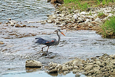 Royalty-Free and Rights-Managed Images - Heron On The Grand by Debbie Oppermann