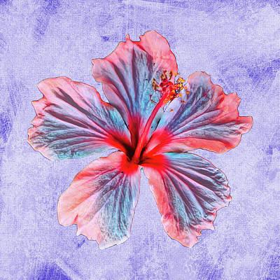 Mixed Media Royalty Free Images - Hibiscus Design Royalty-Free Image by Rosalie Scanlon