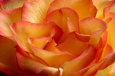 Fantasy Royalty-Free and Rights-Managed Images - High and Magic Rose by Perry Correll