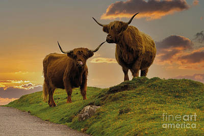 Spot Of Tea Rights Managed Images - Highland Cows At Sunset Royalty-Free Image by Rawshutterbug
