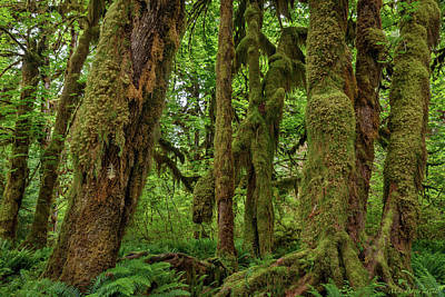 Stellar Interstellar Royalty Free Images - Hoh river 720-19 Royalty-Free Image by Mike Penney