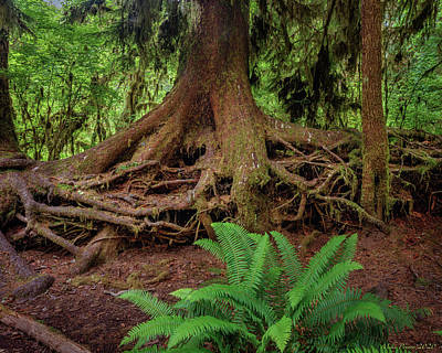 Stellar Interstellar Royalty Free Images - Hoh river 720-21 Royalty-Free Image by Mike Penney