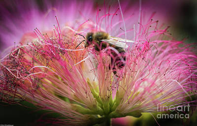Animals Royalty-Free and Rights-Managed Images - Honey Bee At Work by Mitch Shindelbower