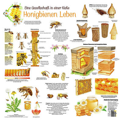 World War Two Production Posters - Honey Bees Infographic GERMAN by Gina Dsgn