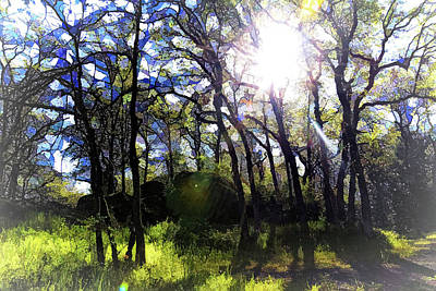 Abstract Animalia - Hood River - The Path of Reflection by Image Takers Photography LLC - Carol Haddon