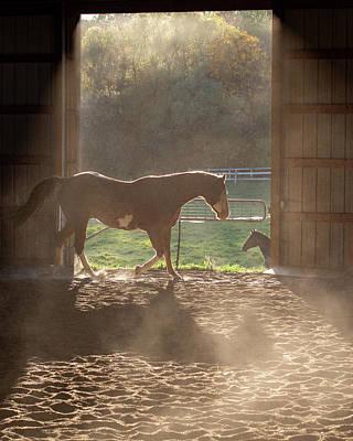 Travel - Hoof Dust by Donald Woelz
