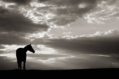Photograph - Hope by Shelley Paulson
