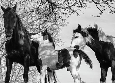 Animals Royalty-Free and Rights-Managed Images - Horse Family - BnW by Umberto Barone