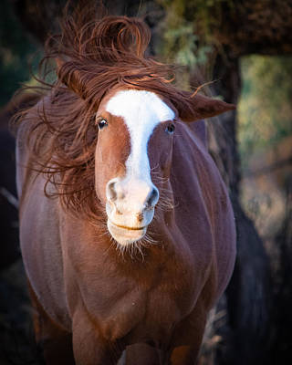 City Scenes - Horse Hair Dont Care by Bonny Puckett