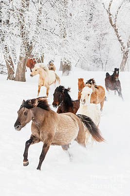 Photograph - Horse Herd in Winter by Shelley Paulson