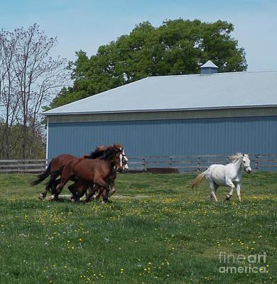 Polaroid Camera - Horse Race 8x8 by Skip Willits