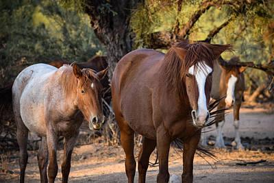 Photograph - Horse Trio by Bonny Puckett