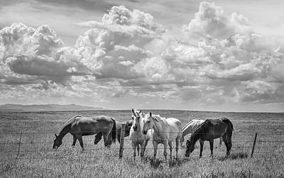 Animals Royalty-Free and Rights-Managed Images - Horses at the Fence Wyoming BW by Joan Carroll