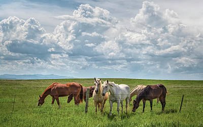 Superhero Ice Pop - Horses at the Fence Wyoming by Joan Carroll
