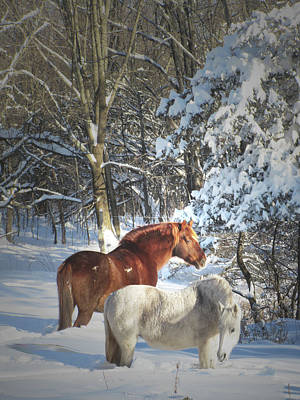 Animals Royalty-Free and Rights-Managed Images - Horses In Winter Snow In The Catskill Mountains by Patricia Keller