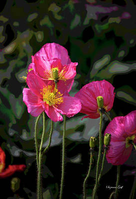 Food And Flowers Still Life - Hot Pink Poppies - Posterized by Suzanne Gaff
