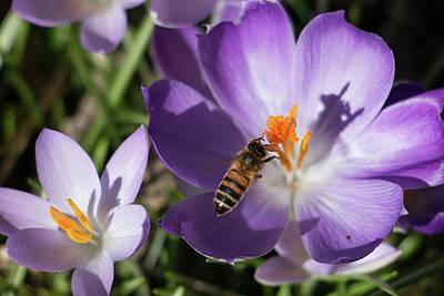 Ballerina Art - Hovering Honeybee creating Shadow by Jackie Tweddle