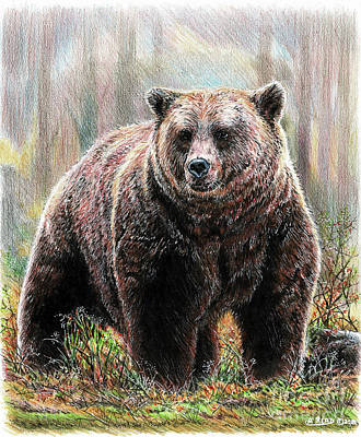 Animals Drawings - Huggy the Grizzly Bear by Andrew Read
