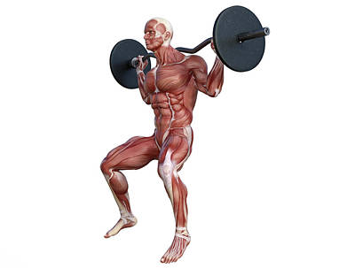 Safari - Human Anatomy Gym Exercise 25 by Barroa Artworks