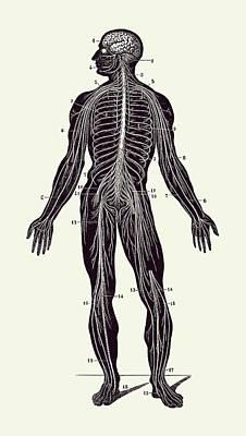 American West - Human Lymphatic System - Vintage Anatomy Poster 2 by Vintage Anatomy Prints