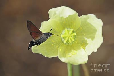 Digital Art - Hummingbird butterfly by Babette Van den Berg