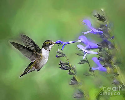 Fruits And Vegetables Still Life - Hummingbird Captures the Flower by Kerri Farley