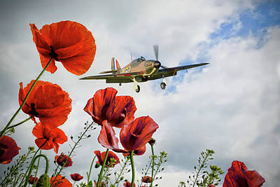Beers On Tap - Hurricane Poppy Fly Past by Airpower Art