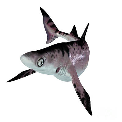 Achieving - Hybodontiformes Shark by Corey Ford