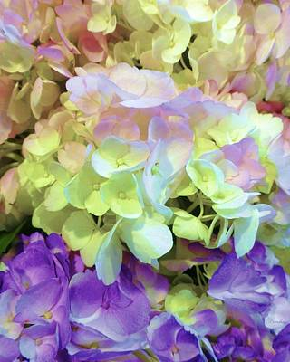 Design Turnpike Books - Hydrangea Fantasia by Barbie Corbett-Newmin