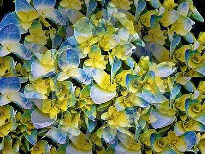 Mixed Media Royalty Free Images - Hydrangea Illusion Royalty-Free Image by Emma Carter Brooks