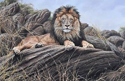 Animals Paintings - I am King - Lion Painting by Alan M Hunt