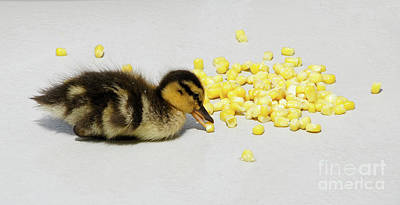 Photograph - I Love Corn by Michele Burgess