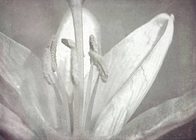 Classic Golf - I Remember When The Lilies Bloomed by David Beard